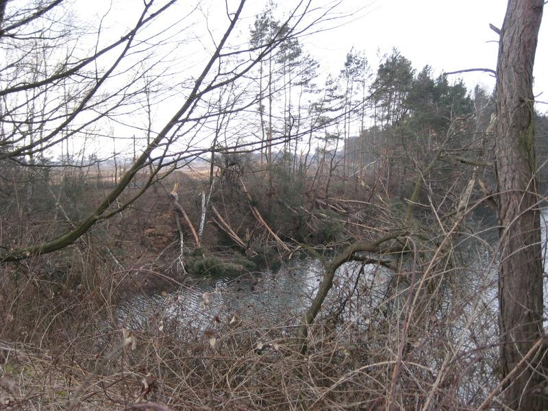 Südseite Mönchwaldsee 2